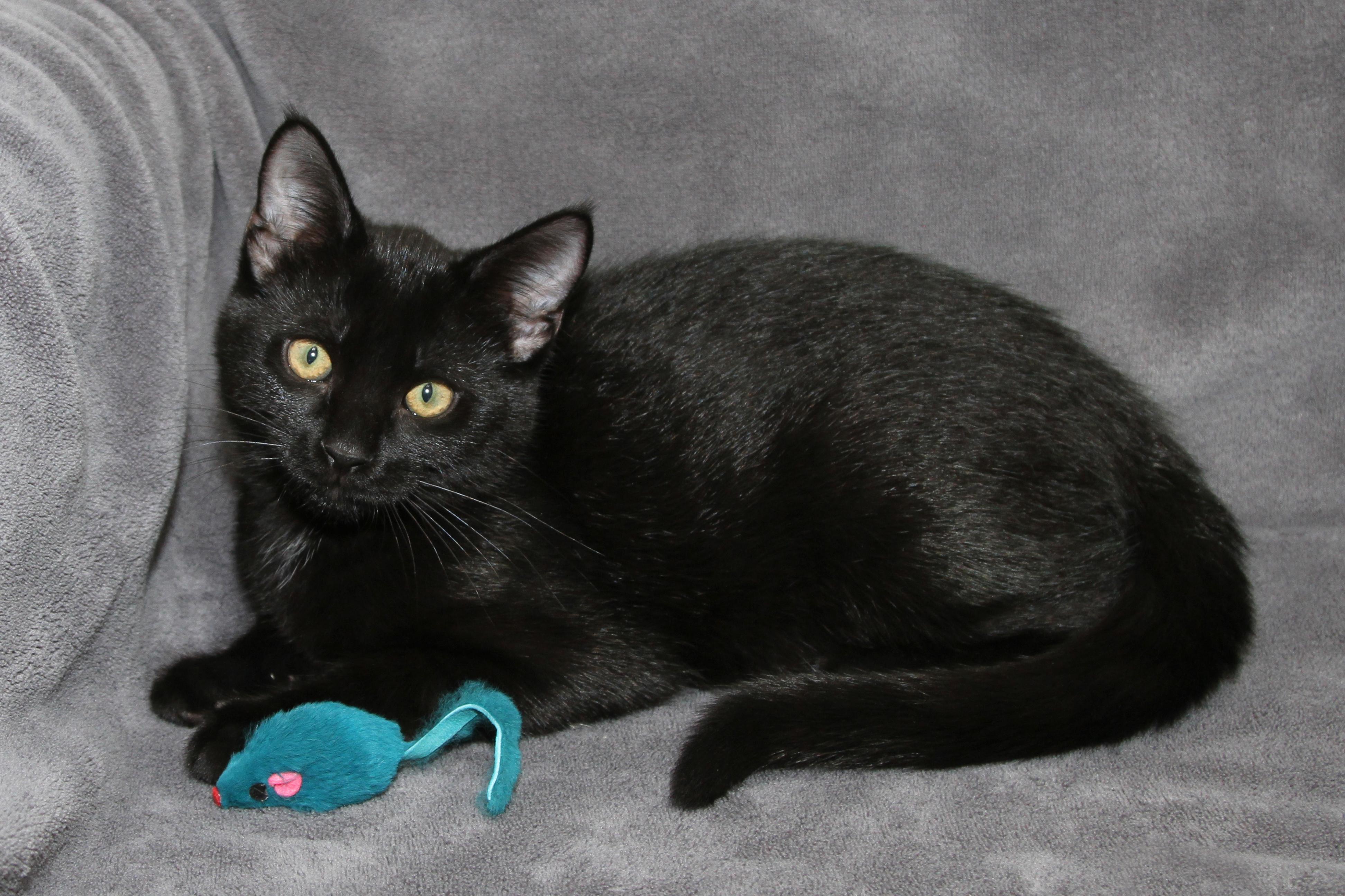 Available Cats | Central Dakota Humane Society